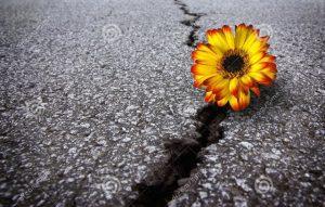 fiore-asfalto-11921115